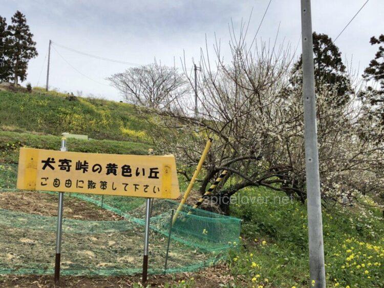 佐礼谷 犬寄峠 黄色い丘